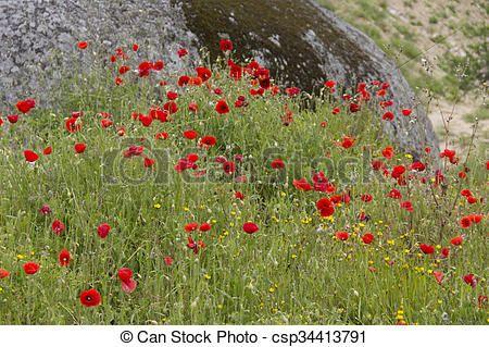 Banco de imagem - planta, flor, flor, flor, fluxo - banco de imagens, fotos royalty free, banco de imagens, estoque fotográfico, fotos, gráfico, gráficos