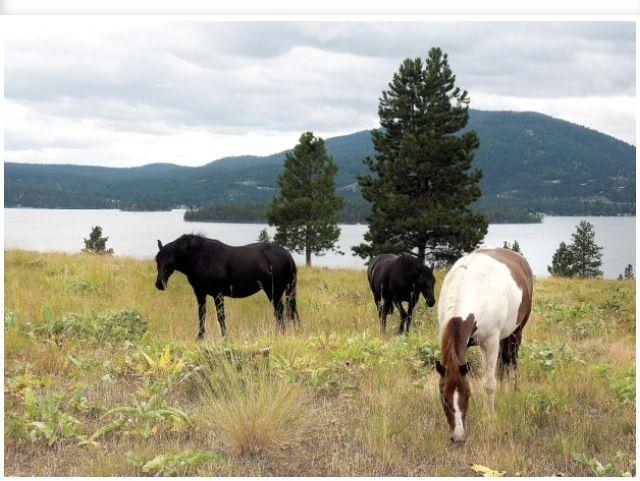 The wild horses beautiful wild horses still running free pinterest