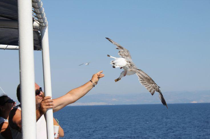 Seagulls, Thassos, Greece