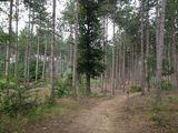 Grand Rapids, Michigan Trails | Hiking, Camping, Biking, Dog Friendly Trails | AllTrails.com