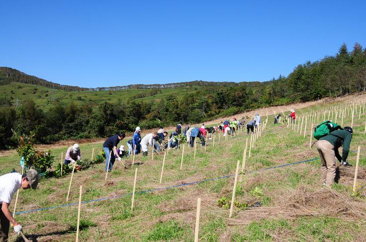 ≪Present Tree in 宮古≫第1回植樹イベント_20121008 班に分かれて植栽作業開始