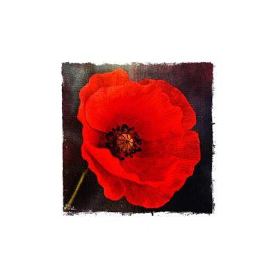 Irene Navarra / Visioni: Haiku / Le parole di un  fiore (The Words of a Flo...