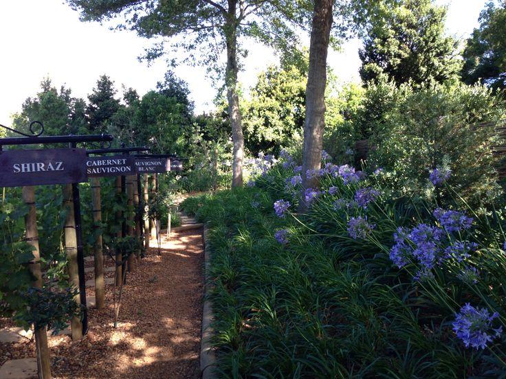 My type of gardening ! Beautiful vines and gardens at DelAire Graff, Stellenbosch