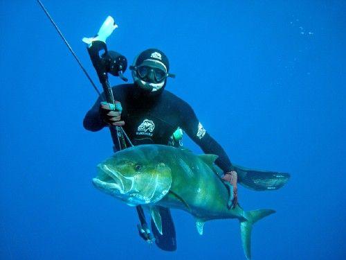 B.Salvatori - Photo chasse sous-marine WikiCSM