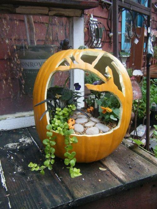 DIY Inspiration: Pumpkin Fairy Garden from Cottage Home & Garden on Pinterest (original source).For more pumpkin DIYs go here:halloweencrafts.tumblr.com/tagged/pumpkins