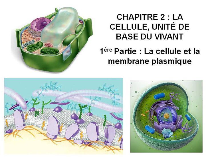 vidéo COURS BIO LA CELLULE PARTIE 4 présente les processus de transcription et de maturation nucléaire des [...]