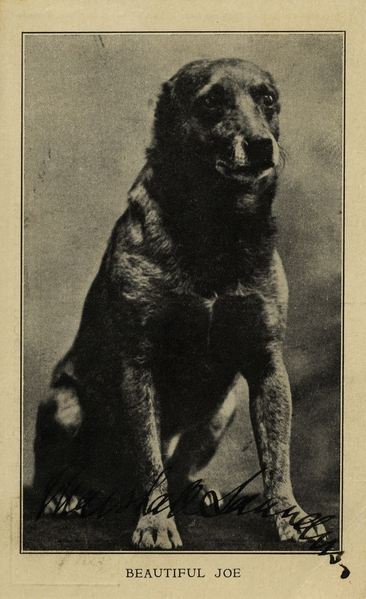 """In 1893, Canadian Marshall Saunders wrote Beautiful Joe's """"autobiography"""" based on the real life story of an abused dog. It's a key novel in the history of the animal rights movement, and it was the first Canadian book to sell over a million copies."""