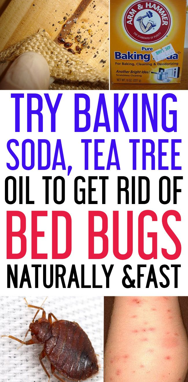 How To Get Rid Of Bed Bugs Naturally & Fast?....... Rid