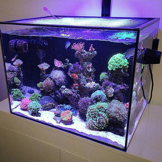 1000 Ideas About Reef Aquarium On Pinterest Coral Reefs