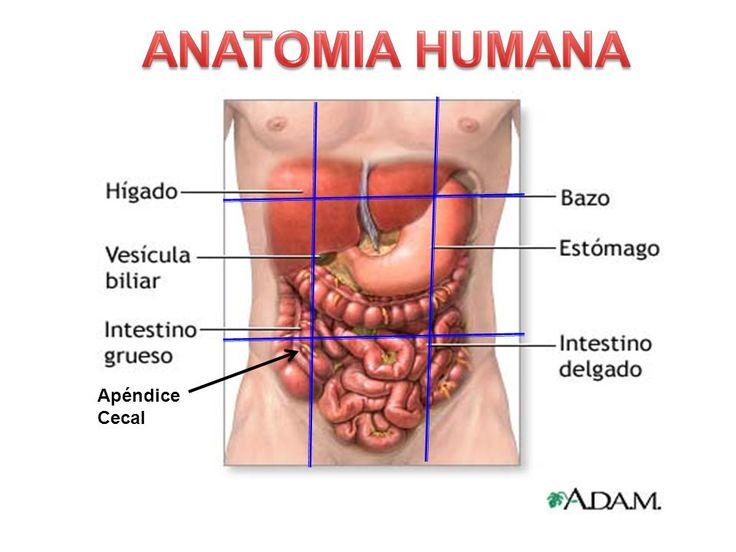 ANATOMIA+HUMANA+Apéndice+Cecal.jpg 960×720 pixels