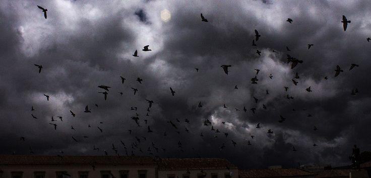 Pigeons, Tunja