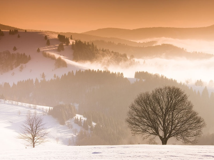 504 Best Black Forest Images On Pinterest Black Forest Germany Jungles And Beautiful Places