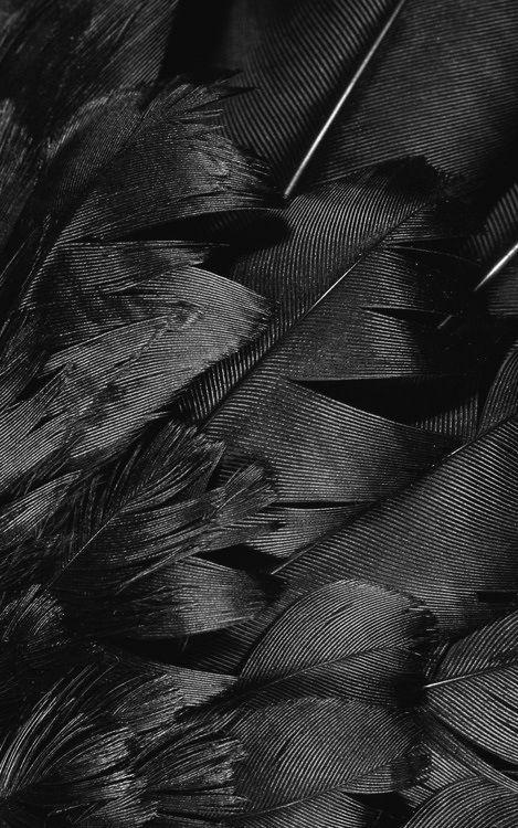 Svarta fjädrar...