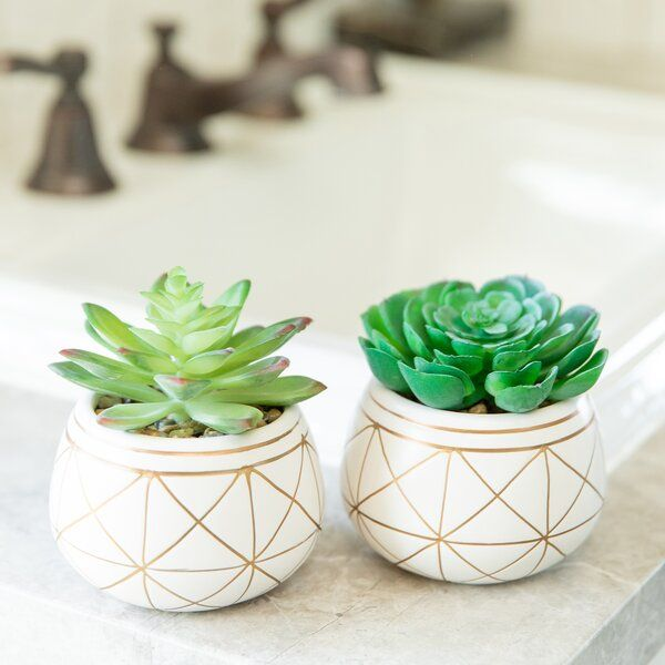 The 2 Piece Geo Succulent Plant In Pot Set Was Made For You Make It Yours Today At Joss Main Free Shipping On O Pot Sets Planting Succulents Bathroom Plants