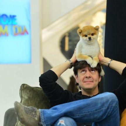 Quem nunca acompanhou as aventuras do cachorrinho do apresentador Celso Zucatelli no programa Hoje em Dia? Amado pelos expectadores, Paçoca chegou a 100 mil seguidores no Instagram