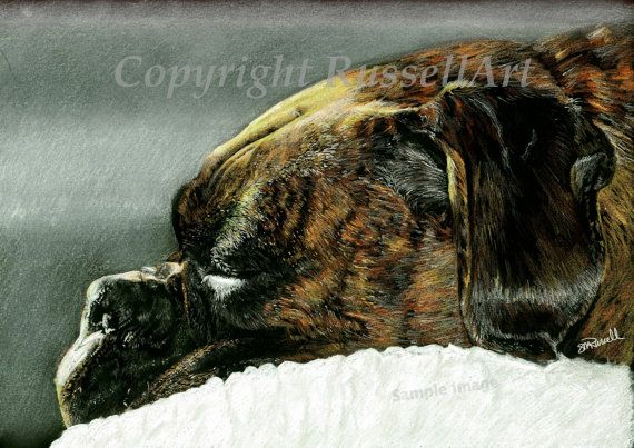 The Sleeper  Boxer Dog A4 A3 or A2 Size Limited by SRussellArt, $10.99