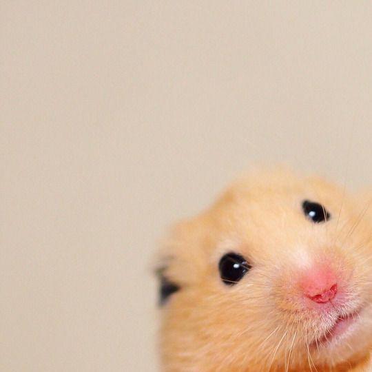 Small Pets... PHOTO OP: Hello!