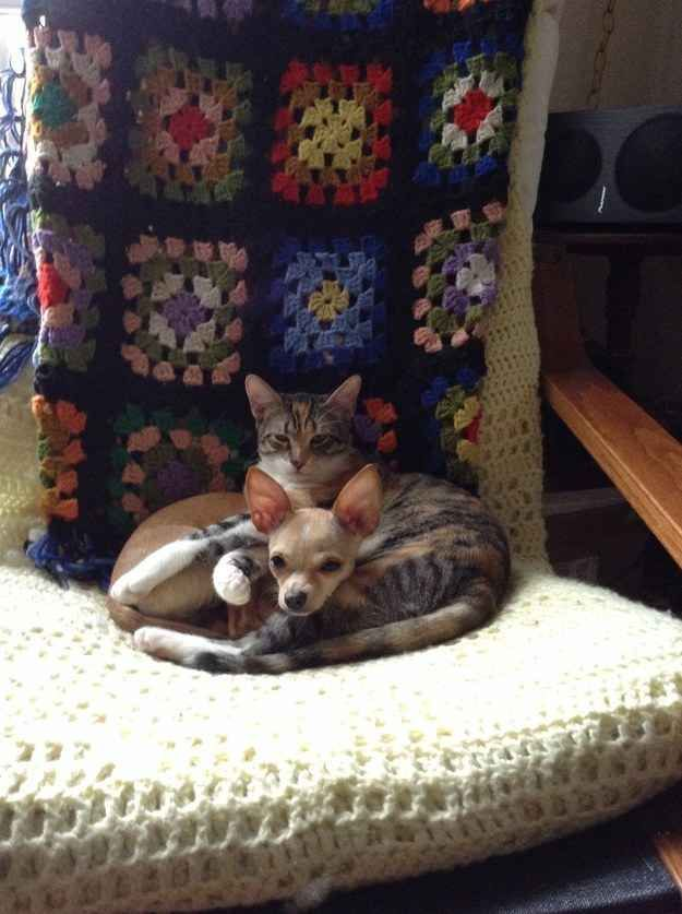 """""""Sometimes, you can even use your buddy as a pillow!"""" —Markie Post & Junebug"""