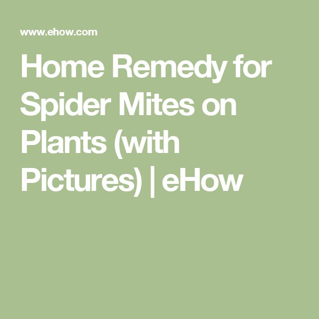 1000 Ideas About Spider Mites On Pinterest Aphid Spray