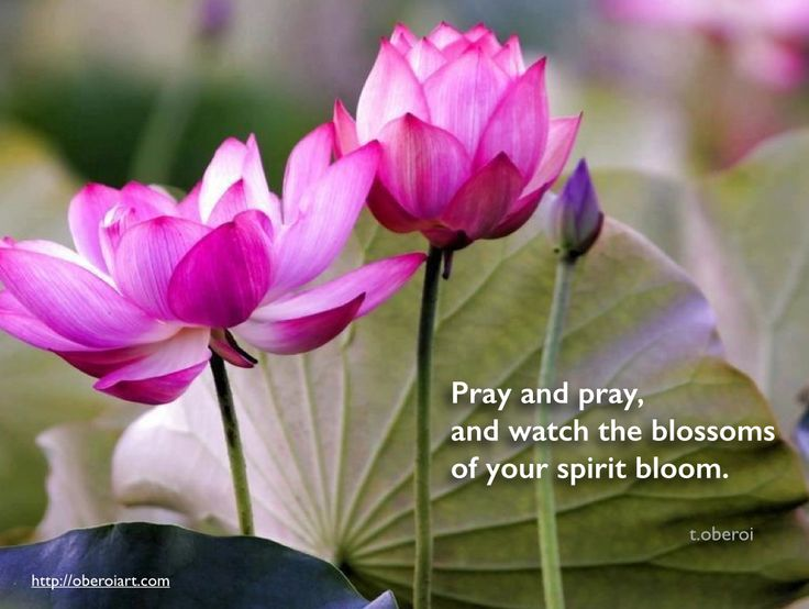 """I hope you enjoy my newest poem: """"Pray and pray, and watch the blossoms of your spirit bloom""""  Please feel free to share it or leave a comment. My photographs and poems can be seen on my website, oberoiart.com"""