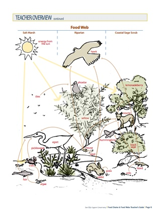 Here's a teacher's guide with activities on food chains and food webs. Even though this is specific to a wetland in California, teachers in any area should find this helpful.