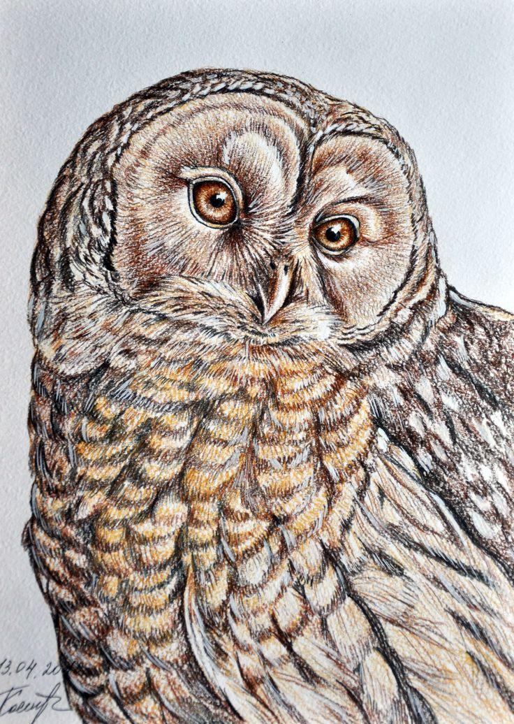 Owl illustration, drawing / Gufo, illustrazione, disegno - (Картины Графика)