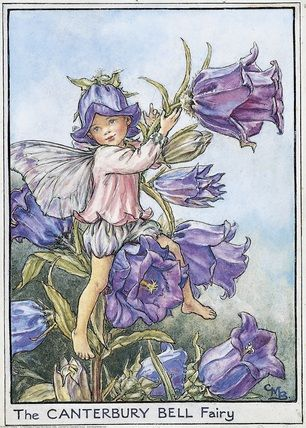 Illustration for the Canterbury Bell Fairy from Flower Fairies of the Garden. A young boy fairy sits in a canterbury bell plant, ringing one of the flower bells. Author / Illustrator Cicely Mary Barker                                                                                                                                                      Plus