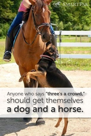 77 Best Horsess Images On Pinterest Beautiful Horses Pretty Horses And Cutest Animals