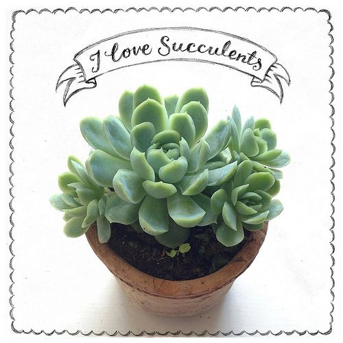 I love succulents | Flickr - Photo Sharing!