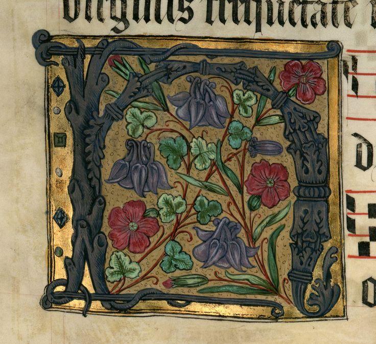 """Lettrine """"H"""" aux ancolies DATE :1500-1600 Détail extrait d'un manuscrit…"""