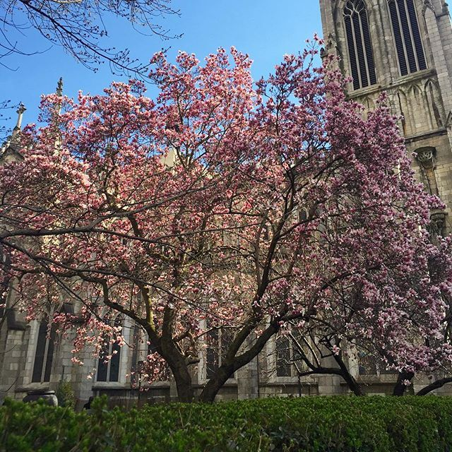 'Twas Easter-Sunday. The full-blossomed trees Filled all the air with fragrance and with joy. – Henry Wadsworth Longfellow