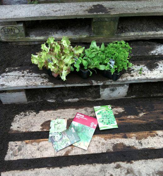 paller i haven #palleurtehave
