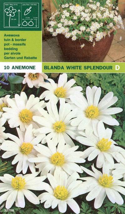 Balkansippa 'White Splendour':   (Anemone blanda)   Lättodlad och fin vårblommare som även är bra till snitt. Får vita blommor i april. Kan odlas i stort sett hela landet. Trivs bäst i ett soligt läge med väldränerad jord. Brukar lämnas i fred av rådjur, kaniner och harar. Blir ca. 15 cm hög. Lökstorlek 5/+. 10 lökar.