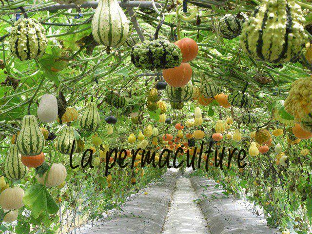 Venez découvrir la permaculture, un art de vivre qui va changer totalement votre façon de jardiner !
