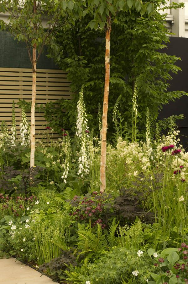 138 best Southfields images on Pinterest Garden plants, Flower