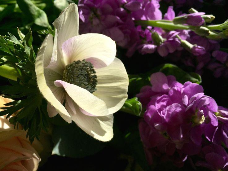 Sunkissed Anemone & Scented Stocks www.theenchantedflower.co.uk