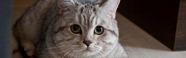 'Helderziende kat' uit Rusland kan gedachten lezen en overbrengen - http://www.ninefornews.nl/helderziende-kat-rusland-gedachten/