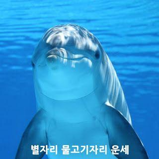 고르디쥬얼리: 별자리 물고기자리 운세