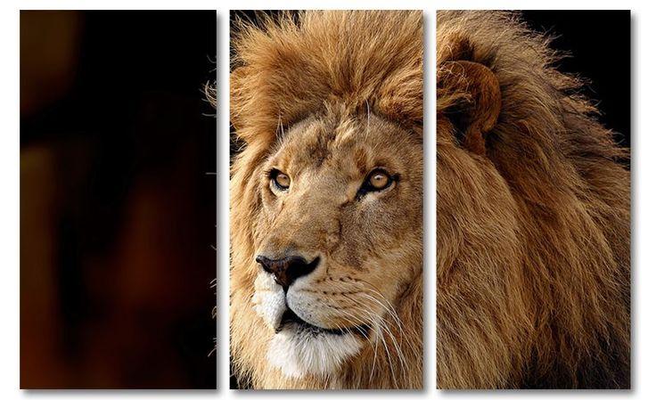 Canvas schilderij leeuw (drieluik)