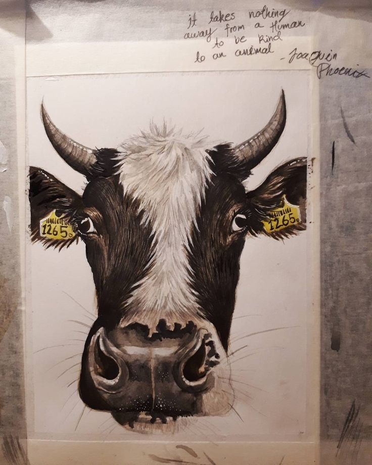 """It takes nothing away from a human to be kind to an animal"" -Joaquin Phoenix  #watercolours #watercolorpainting #painting #love  #art #cow #maketgeconnection #earthlings #animals #vegan #cowspiracy"