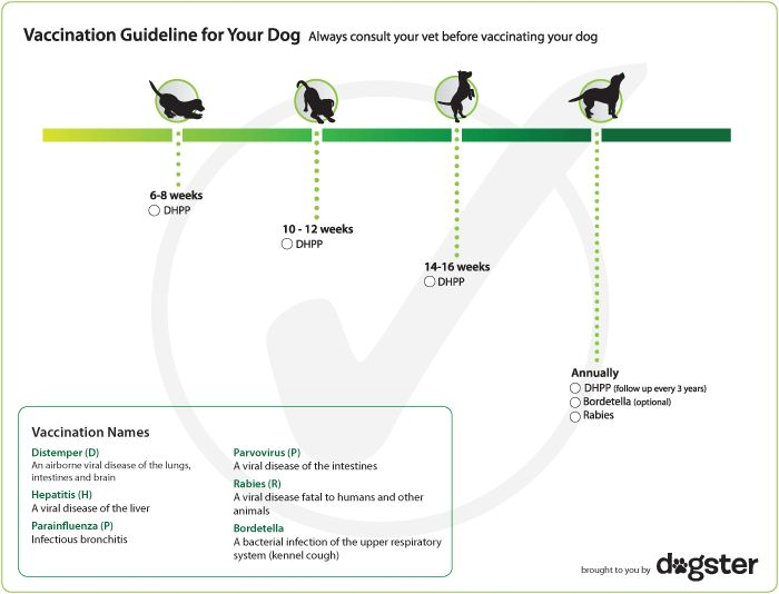 dog vaccination schedule chart worm once a month after age 16
