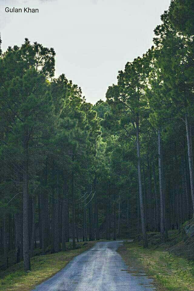 Fantastic forest beauty of Karore Patriata near Muree hill Station Pakistan