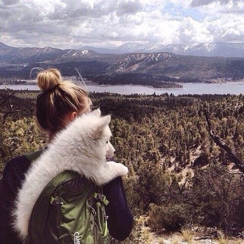adventure, bun, cute, dog, forest, girl, hair style, landscape, love, nature, trip, white dog