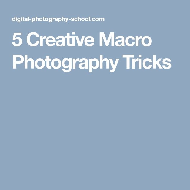 5 Creative Macro Photography Tricks