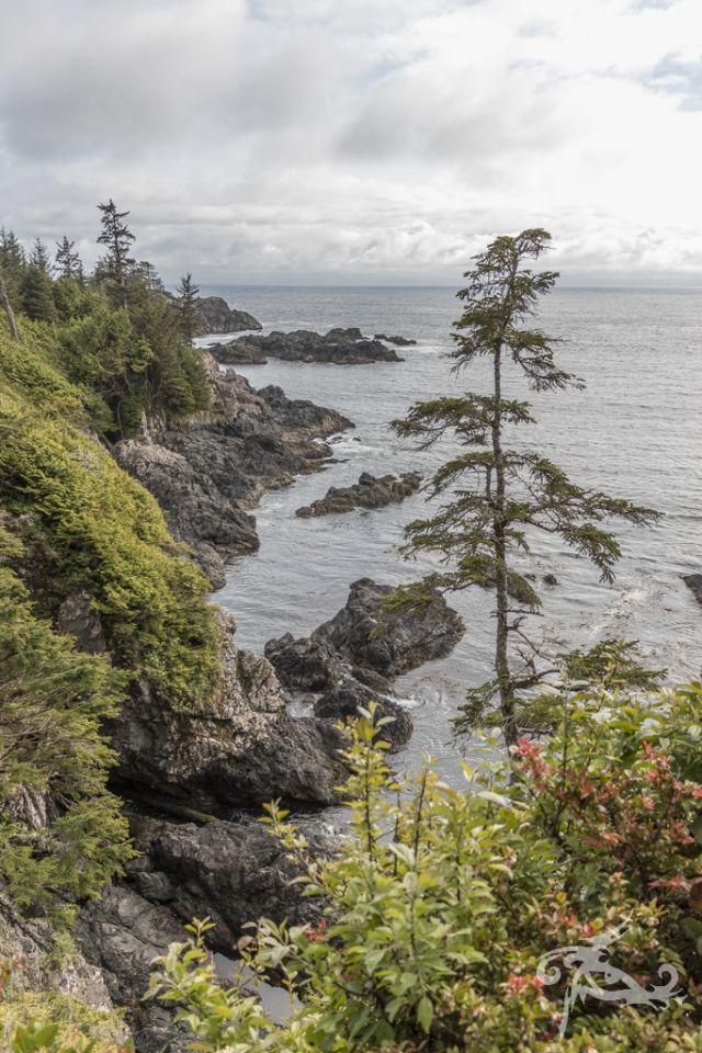 """TAG 5 / TOFINO - Reise mit! 7 Tage """"Kanada light"""" mit der Metropole Vancouver und den Naturwundern von Vancouver Island. Viele Fotos!"""