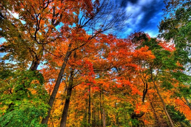 Why Do Leaves Change Color In Fall? | IFLScience