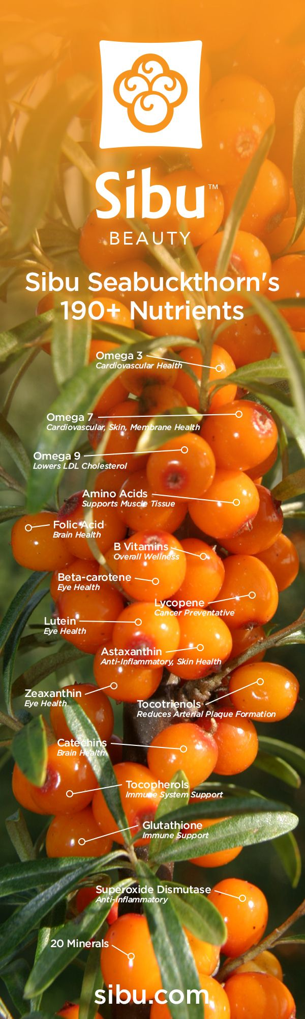 190+ Berry-licious Nutrients in Sea Buckthorn.