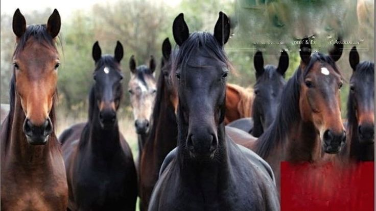 "Petition · Tom Vilsack: STOP THE USDA ""SCAR RULE"" CHANGE WHICH WILL HURT TENNESSEE WALKING SHOW HORSES · Change.org"