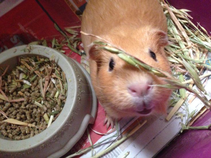 Mama Pig <3