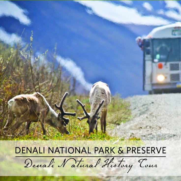 14 best images about Denali National Park Tours on ...